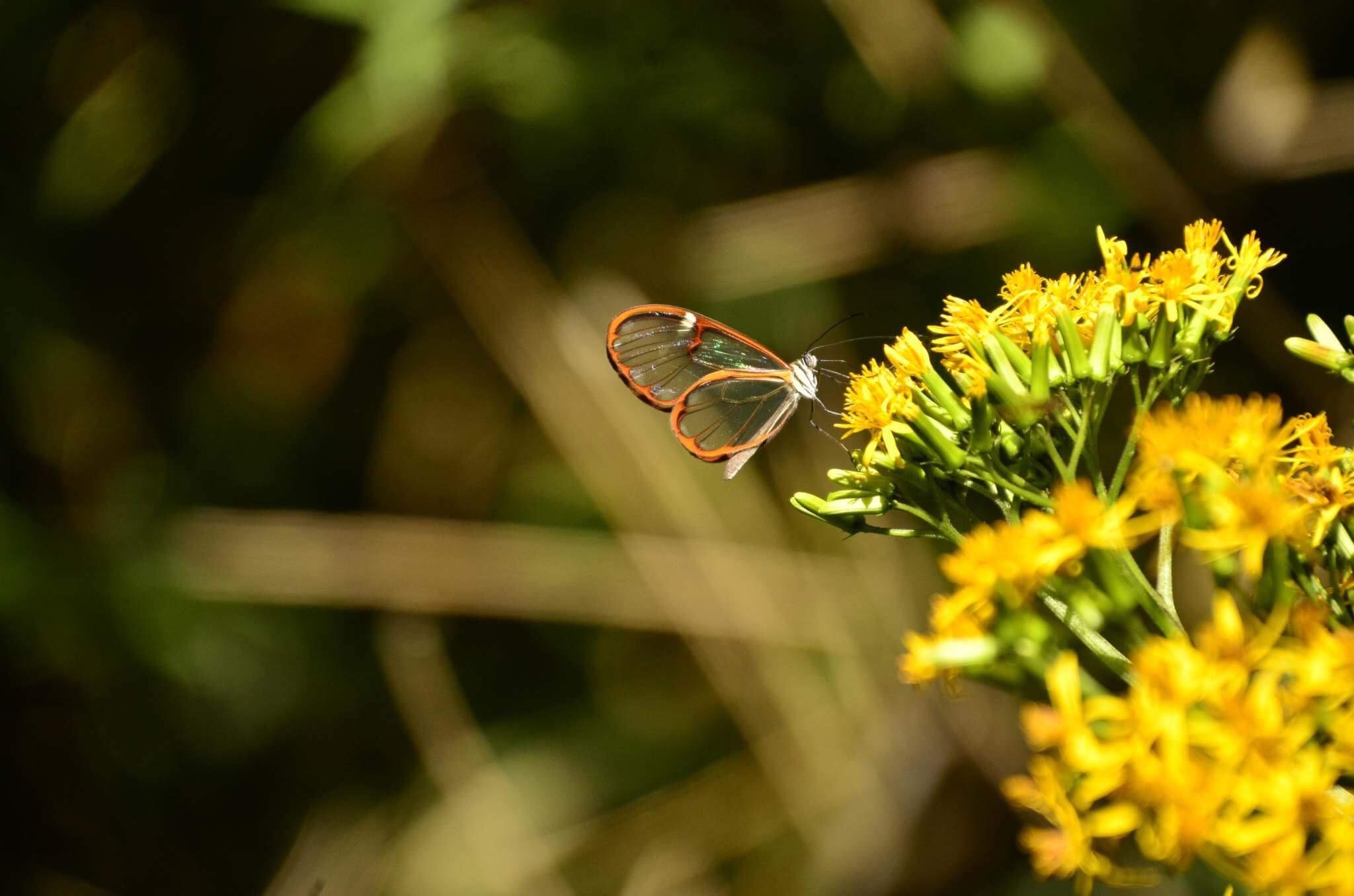 Butterfly-Monteverde